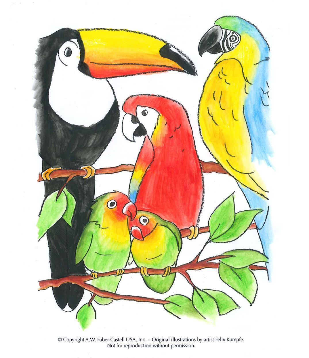 image content detail half children colouring pages animals tropical birds colouredhx